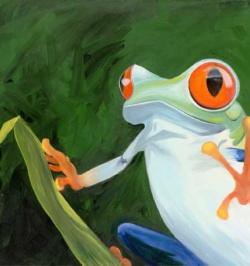 Treefrog-Redeyes
